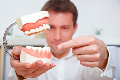 Dentista señalando una dentadura con mordida perfecta